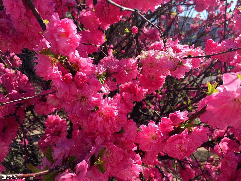 春在校园(三中)